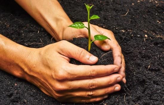 plante-pousser-investissement